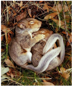 http://www.jokeroo.com/pictures/cute/cute-squirrels-hugging.html