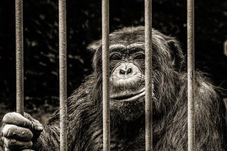 monkey-256420_1280 pixabay